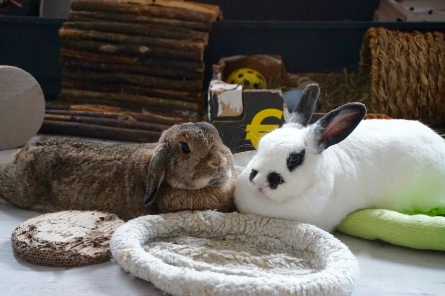 Even voorstellen: konijntjes Uk & Lizz