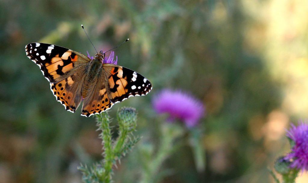 De acht factoren van mindfulness #2: geduld