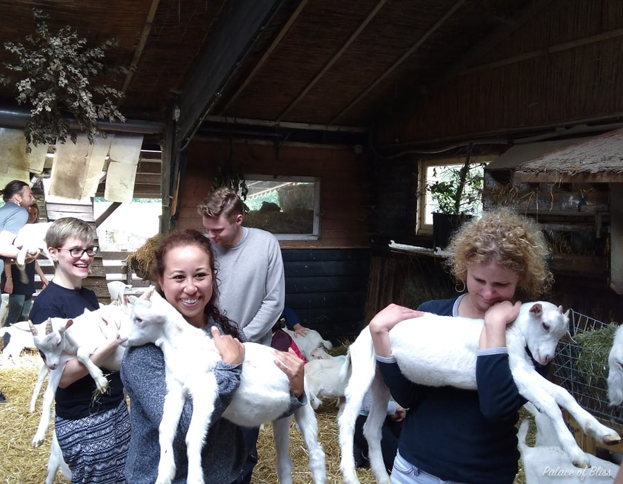 IMG 20170610 090806692 - Knuffelen met geiten tijdens de geitenyoga