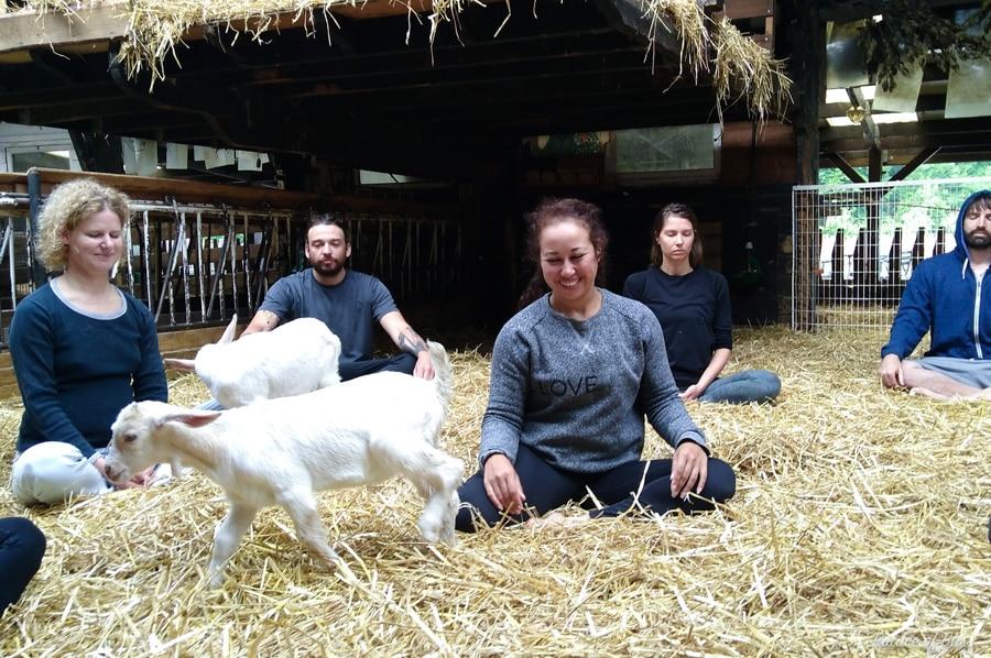 IMG 20170610 091352041 - Knuffelen met geiten tijdens de geitenyoga