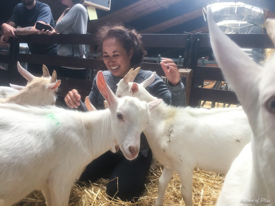 IMG 9151 - Knuffelen met geiten tijdens de geitenyoga