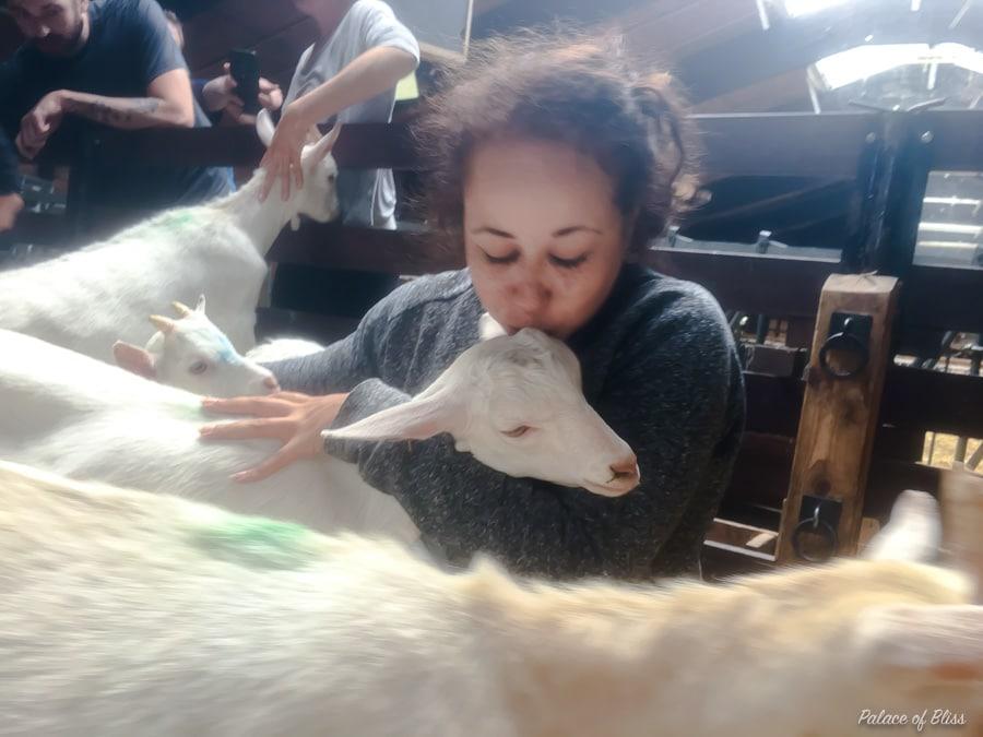 IMG 9158 - Knuffelen met geiten tijdens de geitenyoga
