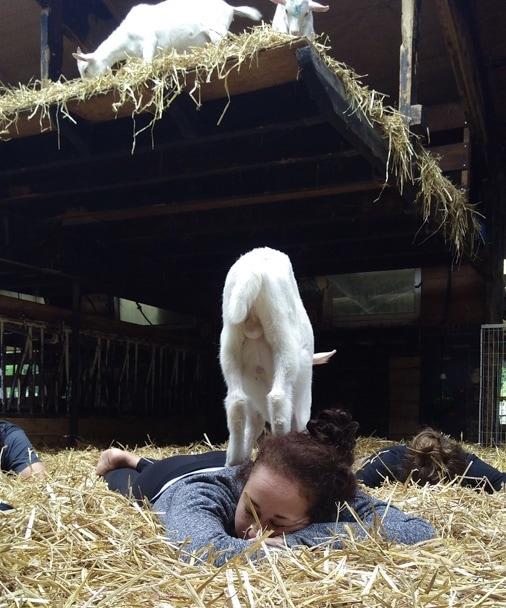 fullsizeoutput 16f6 - Knuffelen met geiten tijdens de geitenyoga