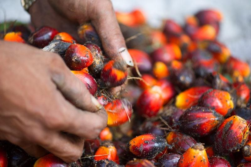 Palm Oil - Ik doe mee met de palmolie challenge. Doe jij met mij mee?