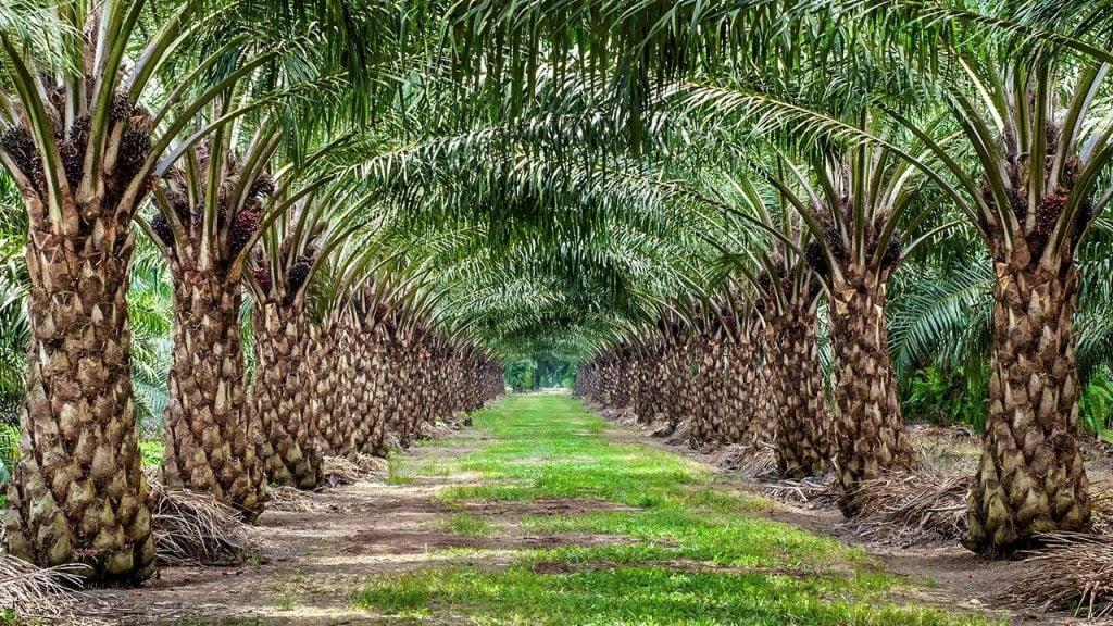 Ik doe mee met de palmolie challenge. Doe jij met mij mee?