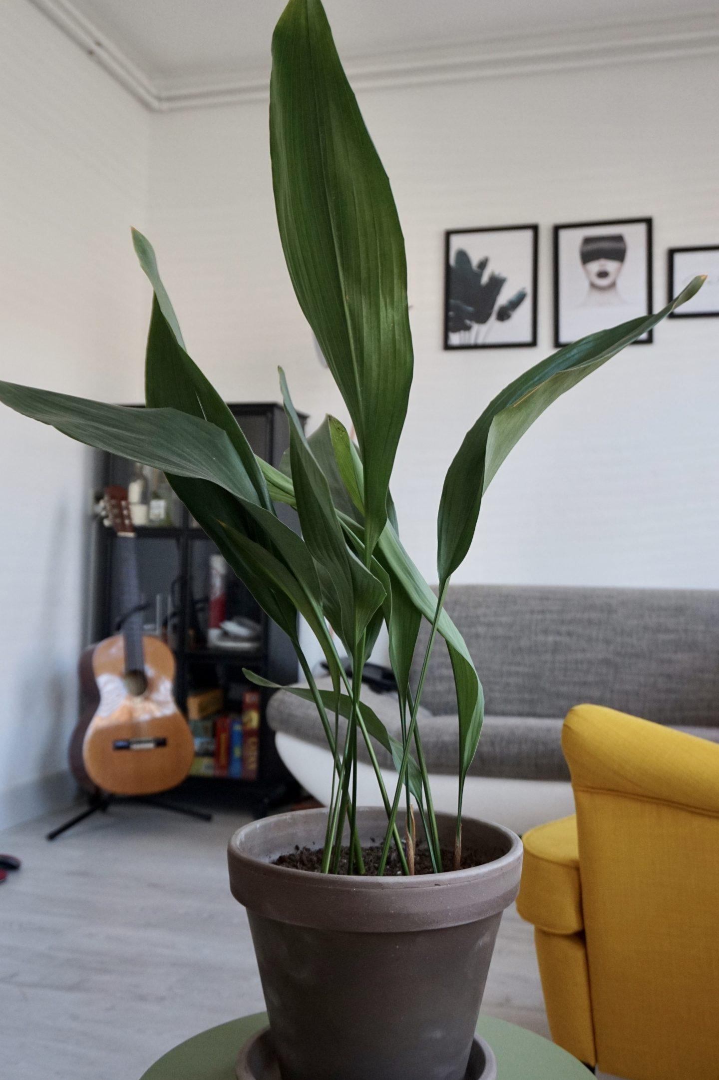 Luchtzuiverende planten Greenlifeshop 1440x2163 - Waarom luchtzuiverende planten goed zijn voor je gezondheid