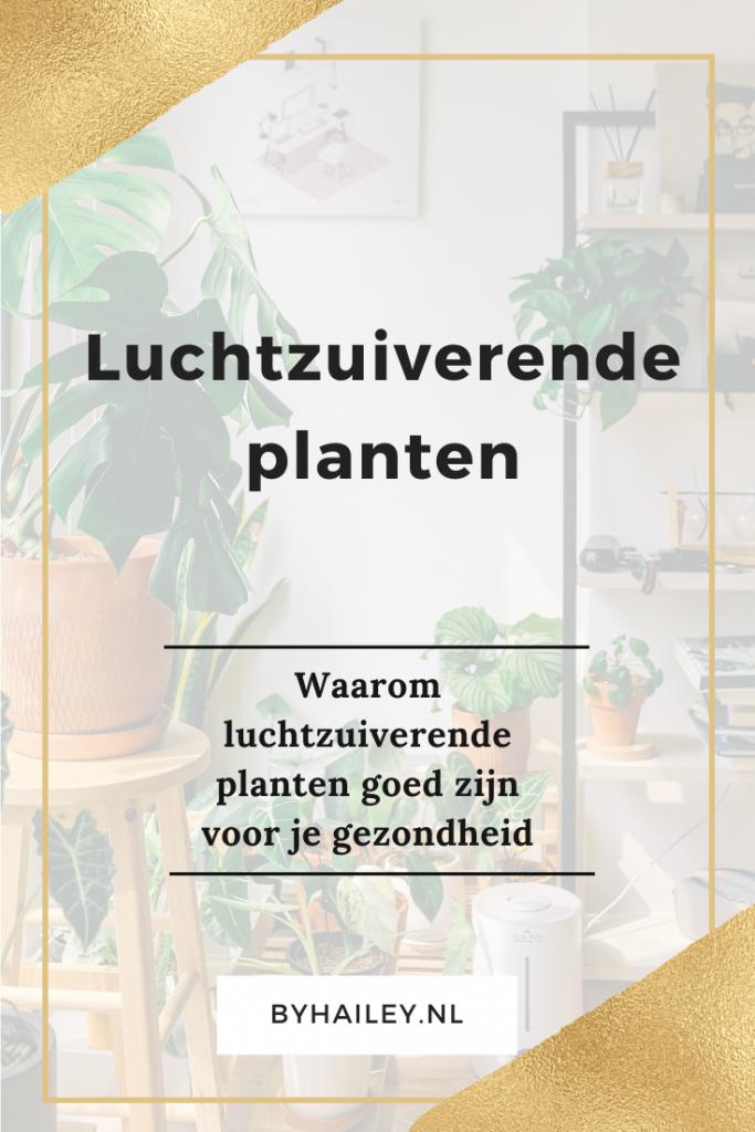 Luchtzuiverende planten en de greenlifestylestore 6 - Waarom luchtzuiverende planten goed zijn voor je gezondheid